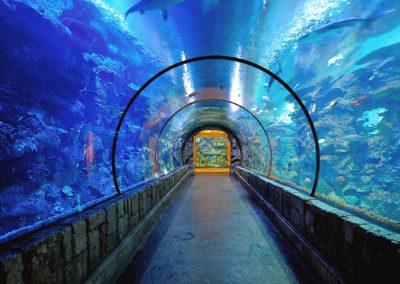 Shark-Reef