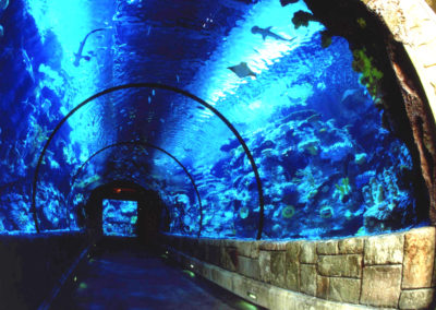 Shark Reef Tunnel copy